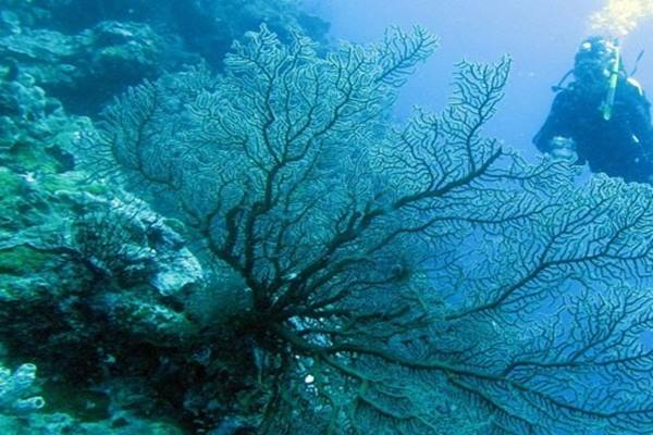 Kembangkan Wisata Bahari, Menpar Dorong Kegiatan Menyelam