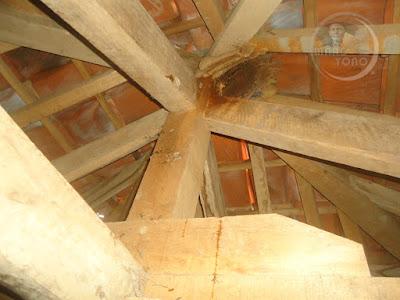 Sarang Tawon Odeng di rangka atap