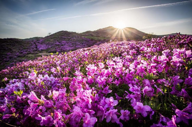 Sapa, Da Lat - Where to welcome the most beautiful spring in Asia 4