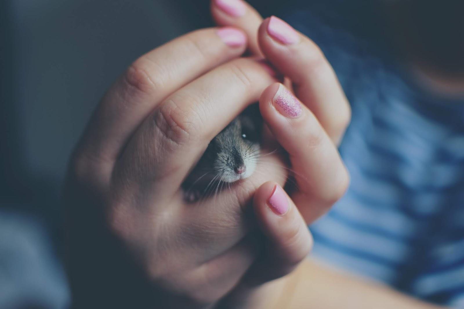 Mãos bonitas, bichinhos fofos, foto tumblr