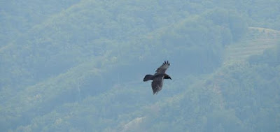 Monte Sumbra corvi in volo