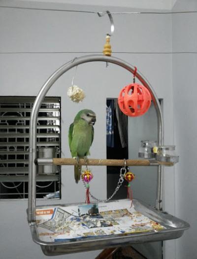 Các loại thức ăn cho vẹt giúp thú cưng luôn khỏe mạnh