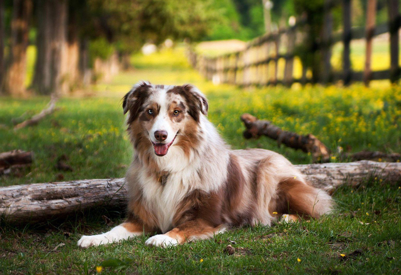 57033f46 15 Eco-Friendly Products for Dog Lovers   Australian Dog Lover