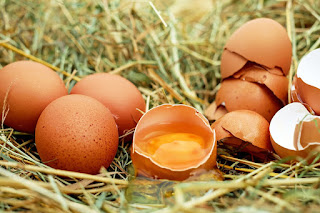 9 Eggs a day for a child's IQ is higher