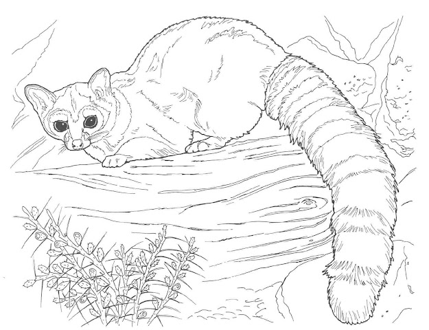 Realistic Animal Coloring Pages Custom With Photos Of Realistic Animal  Photography