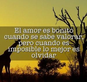 Frases de Amor Imposible no correspondido