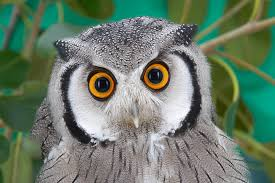 embrace your inner owl, dammit