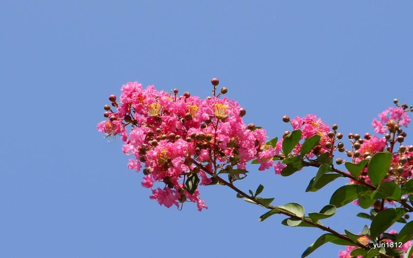 Красный цветок на фоне голубого неба Грузии