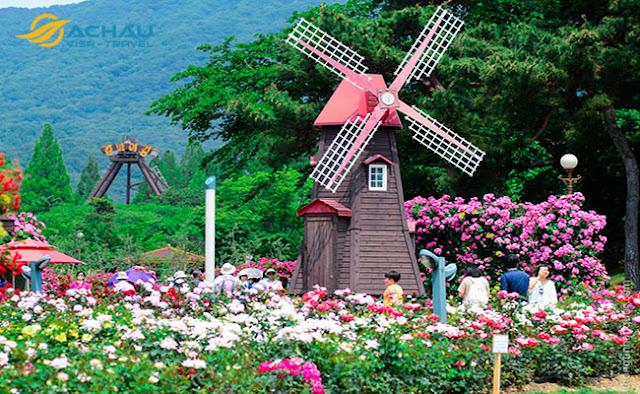 Du lịch Hàn Quốc tháng 5 để trải nghiệm lễ hội hoa hồng đầy thú vị3