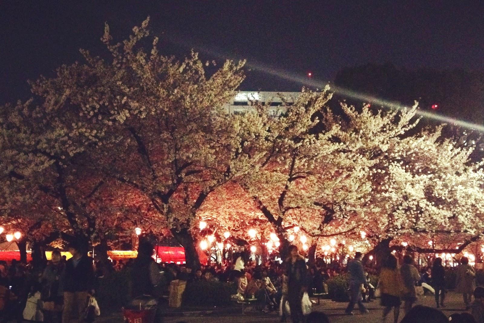 Jackson Riley Hanami A Party To Watch The Sakura