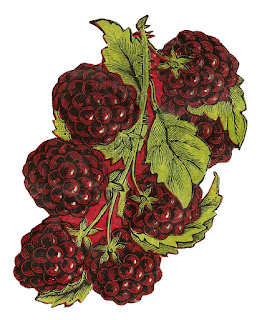 fruit blackberry image digital clip art botanical illustration