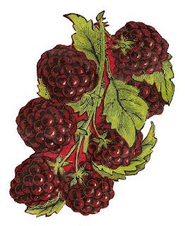 https://3.bp.blogspot.com/-Q-f0EEOf2OY/WReW-3Un0ZI/AAAAAAAAfdw/asJnzlH6AskR37NshBlmj8JfvHAKDs0SwCLcB/s320/fruit-blackberry-image-botanical-artwork-clipart.jpg
