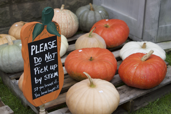 Fall, Pumpkin Picking, Pumpkin Patch, Pick Your Own Pumpkins, Ohiopyle State Park