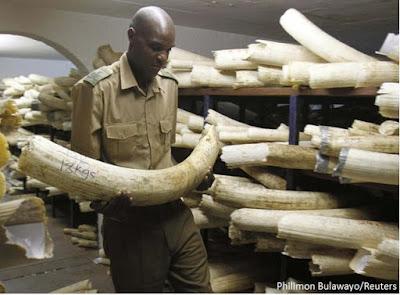 China, mercado de marfim, marfim, caça de elefantes, maior mercado de marfim do mundo, comércio de marfim, mercado internacional de marfim, África, elefantes mortos, caça de elefantes, natureza, conservação