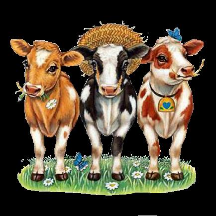 vacas sobre fondo blanco