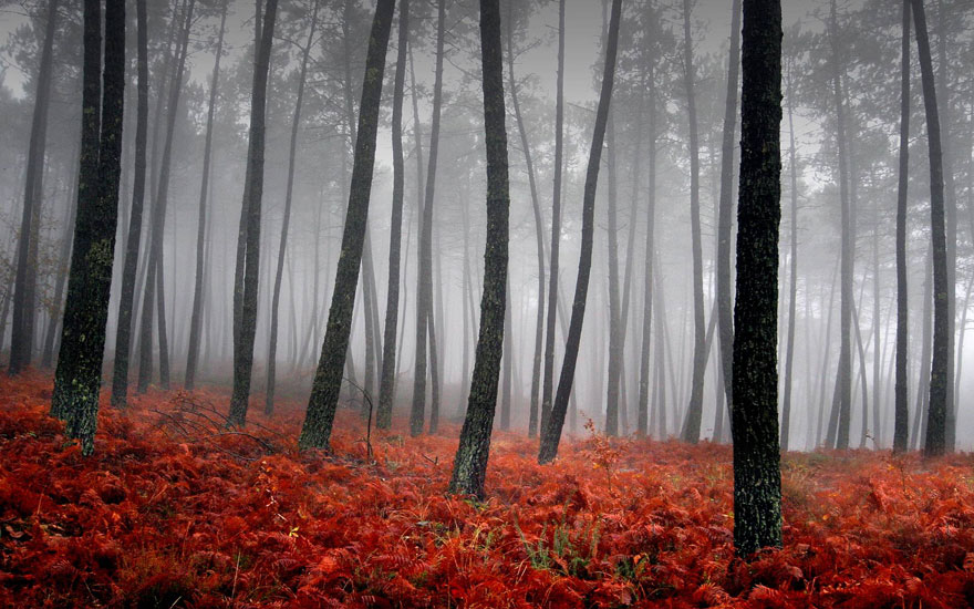 autumn-photography-7