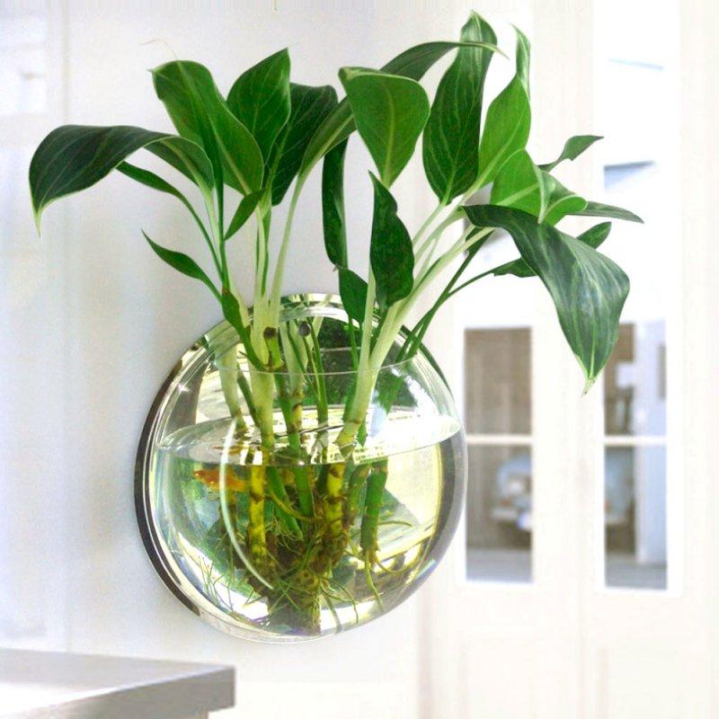 Hidrocultura ou hidroponia op o para quem quer plantas - Jacinto planta de interior o exterior ...
