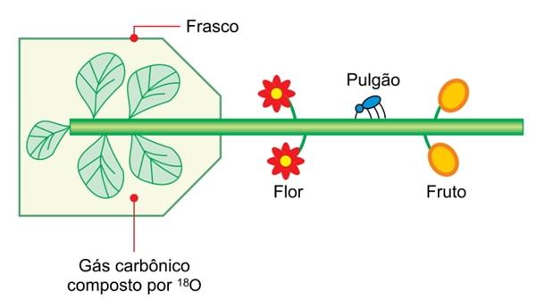 a figura representa um experimento em que o ramo de uma planta com flores e frutos teve suas folhas inseridas em um frasco transparente e selado