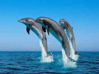 India's and Asia's first Dolphin Research Centre to come up soon in Patna