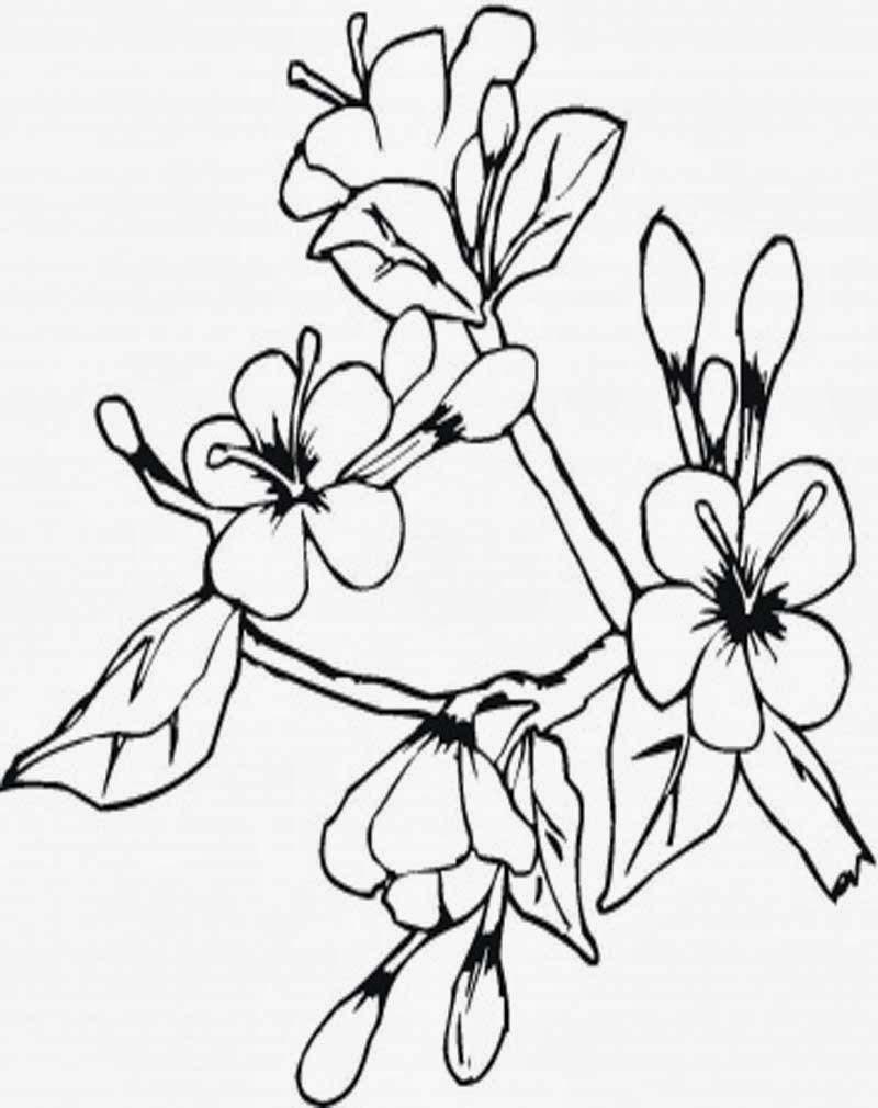 Gambar Bunga Anggrek Untuk Mewarnai