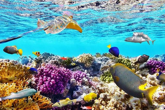 terumbu karang berguna secara ekonomi