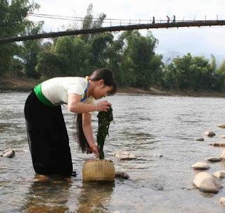 Ha Giang Stone Bryophyte