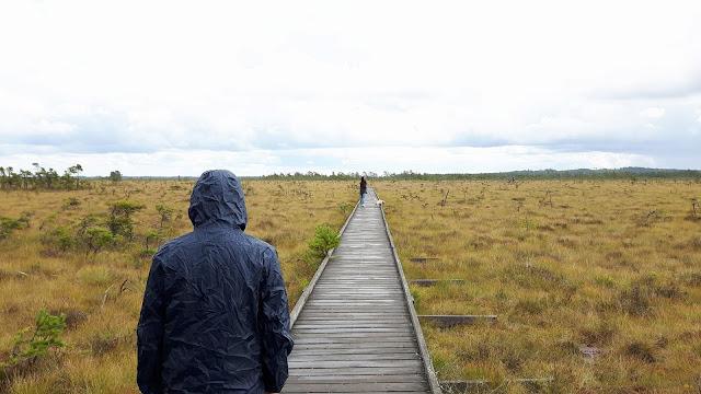 Wandern mit Kindern und Hund durchs schwedische Moor