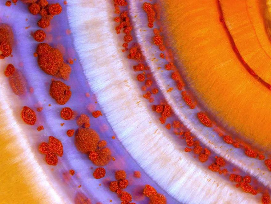 2016 Nikon Macro Photo Contest Winners Show The World Like You've Never Seen Before - Second Place. Polished Slab Of Teepee Canyon Agate
