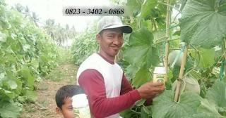 AGEN NASA DI Serbajadi Aceh Timur - TELF 082334020868