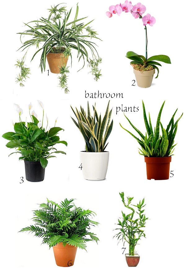 exPress-o: Winter Home: Bathroom Plants
