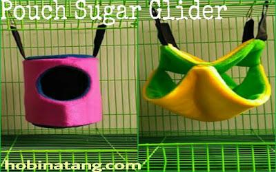 Cara Mengawinkan Sugar Glider yang Tepat dan Benar