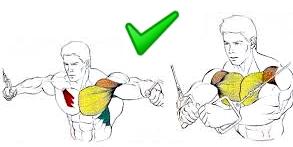 Apertura pecho poleas masa muscular
