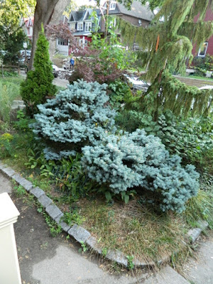 Leslieville fall cleanup before by Paul Jung Gardening Services Toronto