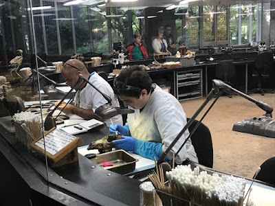 La Brea Tar Pits scientists working