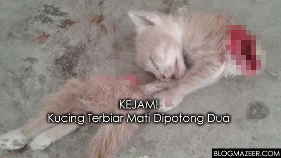 Kucing Jalanan Maut Dikerat Dua