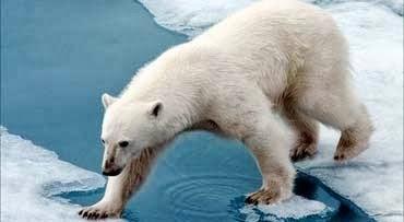 550 Gambar Hewan Beruang Kutub Gratis
