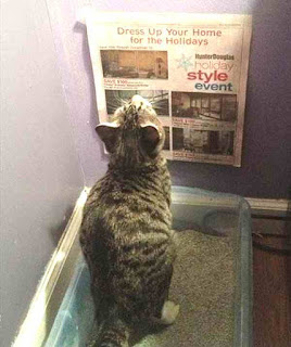 Cat reads on the loo