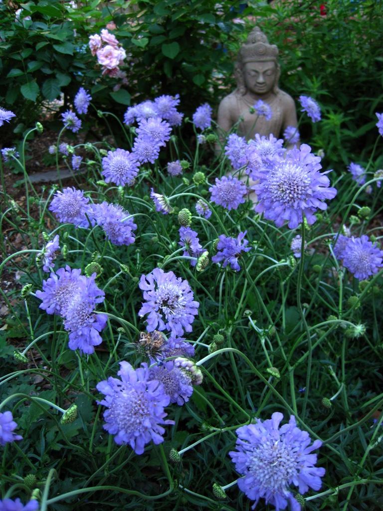 Donald S Organic Texas Garden 04 15 11 May Dream Gardens