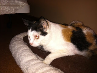 Meet Penelope, A Diabetic Cat who Needs a Home