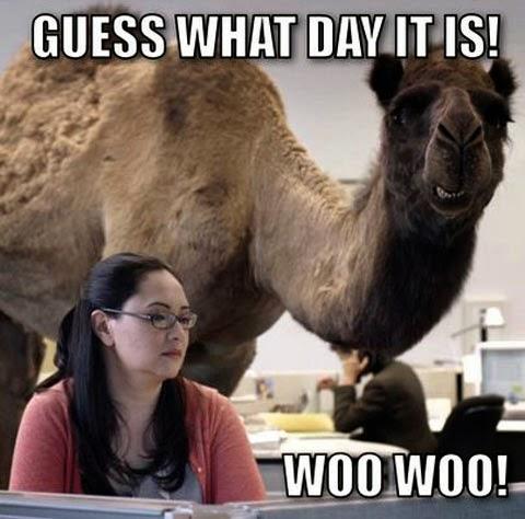Pinstrosity: It's H.U.M.P. Day!!!