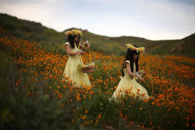 Польові квіти на озері Ельсінор