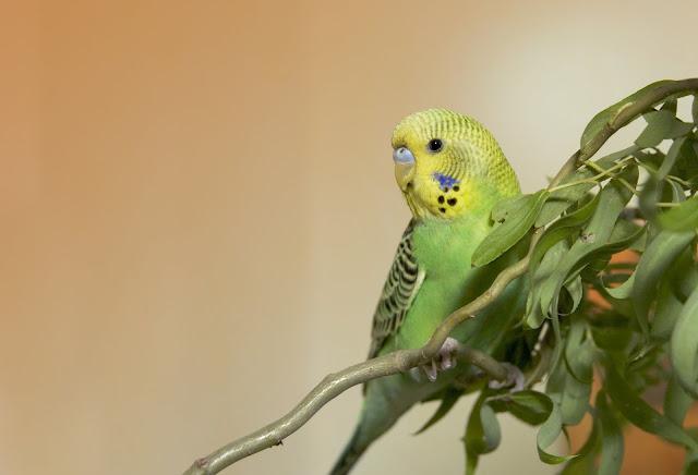 Z Papugą Pod Jednym Dachem Blog Zookarina