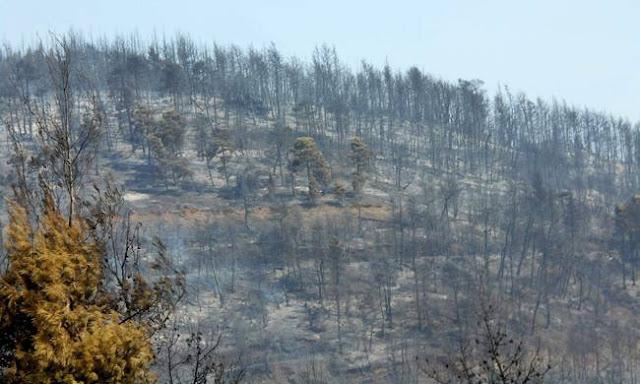 Φωτιά Εύβοια: «Στάχτη» 50.000 στρέμματα δάσους – Βιβλική καταστροφή (pics)