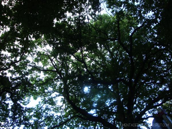Árboles en Hamburg