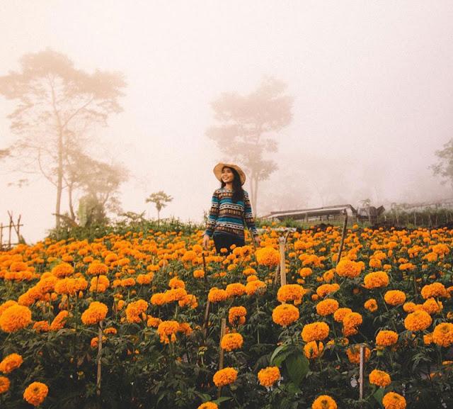 Tempat Wisata Selain Pantai di Bali yaitu Kebun Bunga Munduk