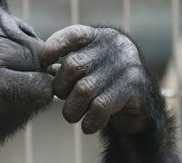 ewolucja dłoni