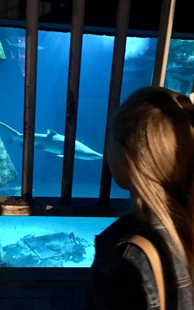 sharks and shark cage at SEALIFE London