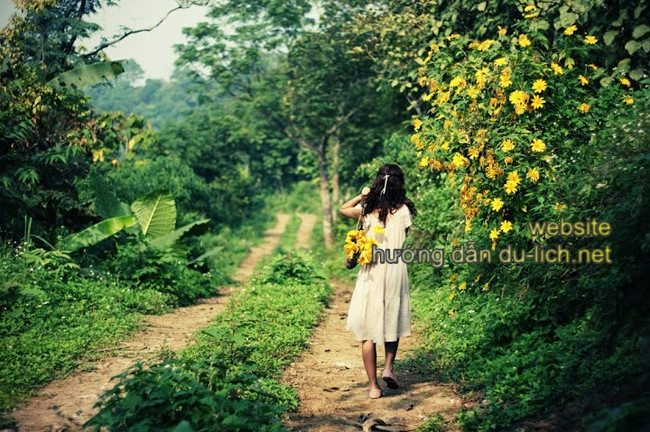 Lang thang trong rừng sẽ gặp nhiều vạt hoa vàng đẹp