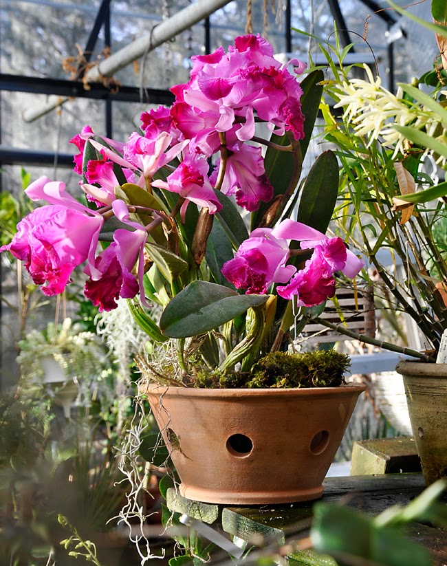 Growing with plants: ABBIE ZABAR'S NEWEST ORCHID POT ...