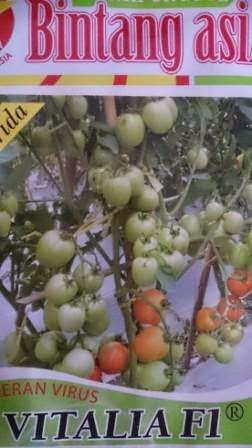 Tomat Vitalia, Benih, Vitalia, BCA,tomat, tahan virus, toleran virus,kuning, keriting, unggul, dataran rendah,  petani, Harga murah, Budidaya, Tanaman